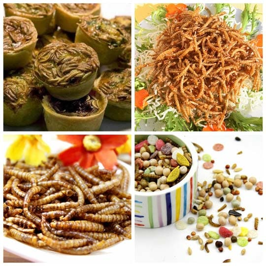 Edible value of the mealworms
