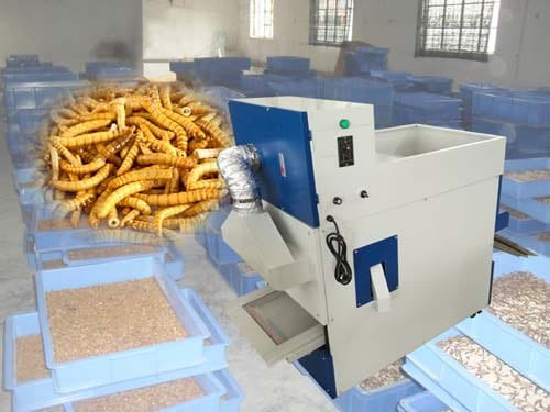 Tenebrio insects screening machine for sale