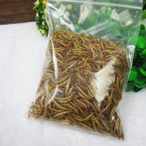 mealworm applications