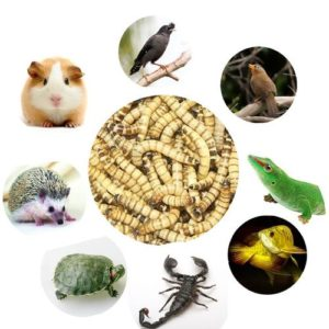 what can mealworms be used for