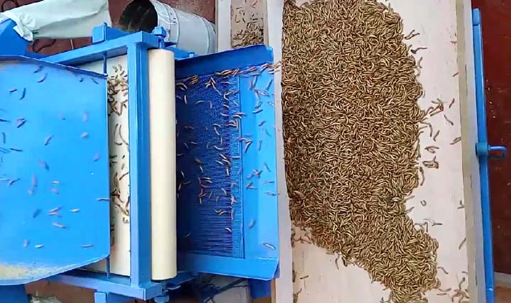working process of the mealworm screening machine