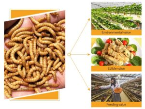 The value of mealworms